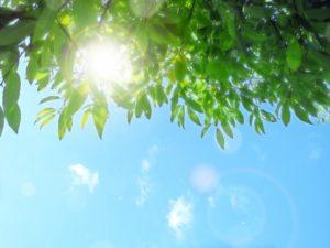 太陽からの日光