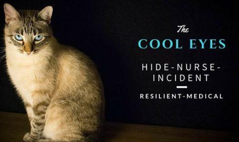カメラ目線の青い目の猫