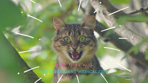 驚いている猫の顔